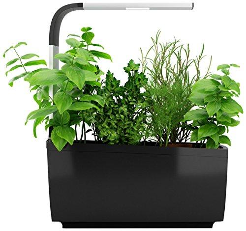 Kit Prêt à Pousser d'Herbes Aromatiques Avis de consommateurs